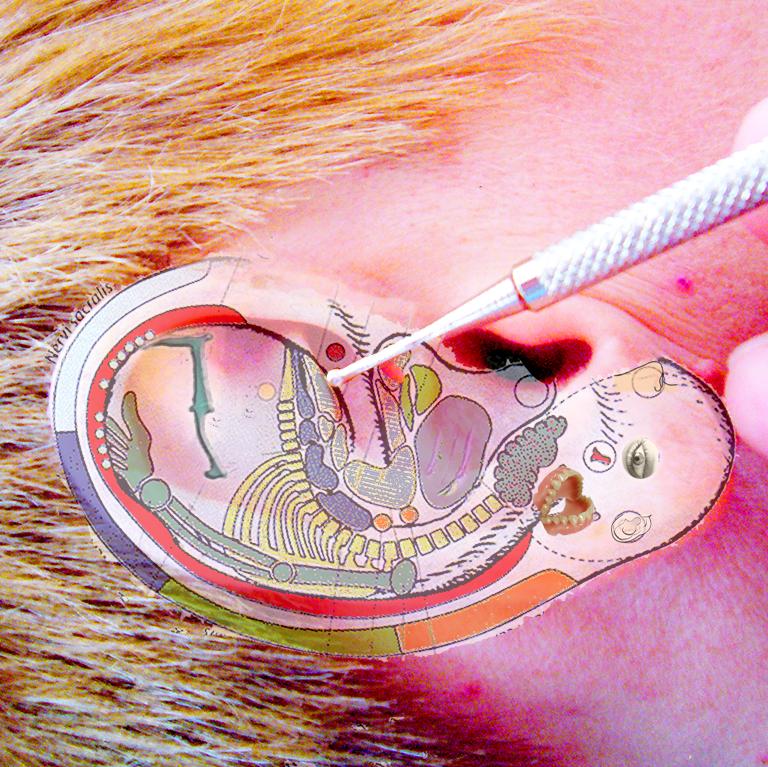 Reflexonen und Ohrsomatotopie